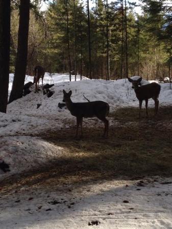 Golden, Kanada: Deer family