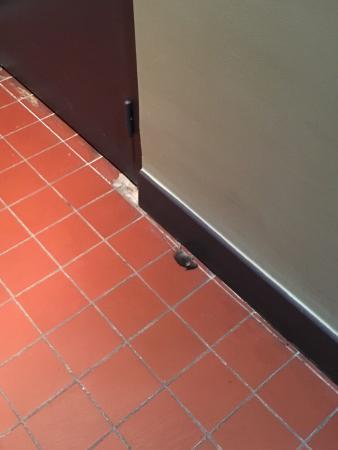 Una rata a la salida de la habitacion el ba o se inunda y for Banos super pequenos
