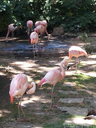 Bar  Zoo