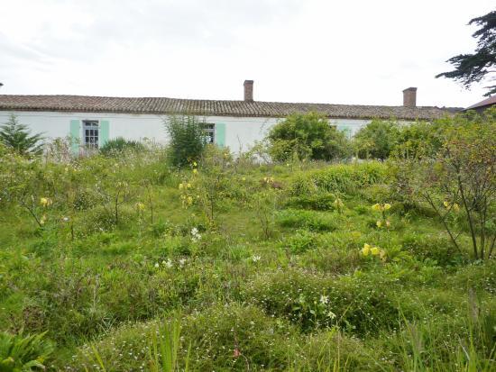 Jardin Sauvage Picture Of Maison Et Jardins De Georges