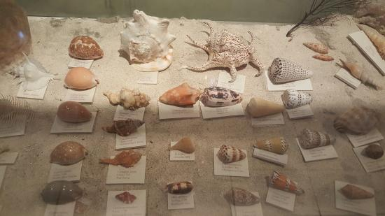 Bohol National Museum: Examples of old seashells found.