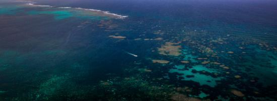 Ningaloo reef dive coral bay australia top tips before you go with photos tripadvisor - Ningaloo reef dive ...