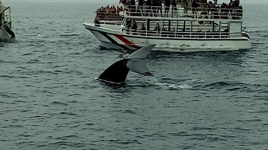 Whale Watching Mirissa with Geeth: mirissa sri lanka Blue whale