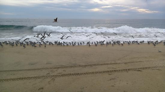 Laguna de Coyuca: Bird flock in Pacific Ocean