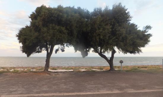 Discovery Parks - Whyalla Foreshore: View from our caravan site.