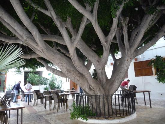 Arco Plaza