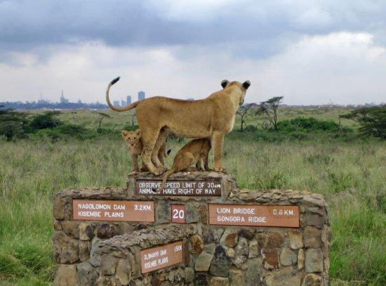 Gracepatt Ecotours Kenya