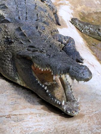 Hotels Near The Crocodile Seattle