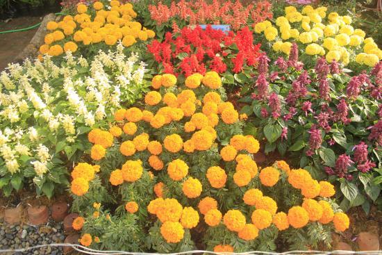 BaguioTransient House: flowers in bloom