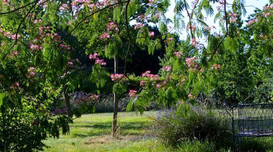 Monts-sur-Guesnes, Francia: Jardin