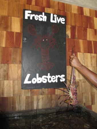 Marigot, Dominica: Choose your own Lobster!