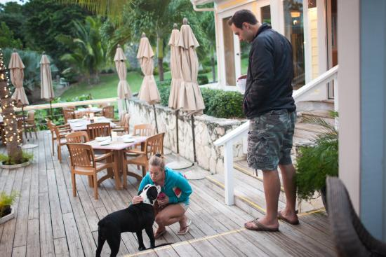 Elbow Cay: We allow pets