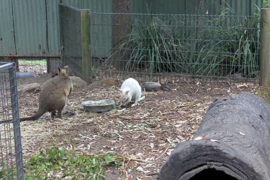 how to get to featherdale wildlife park
