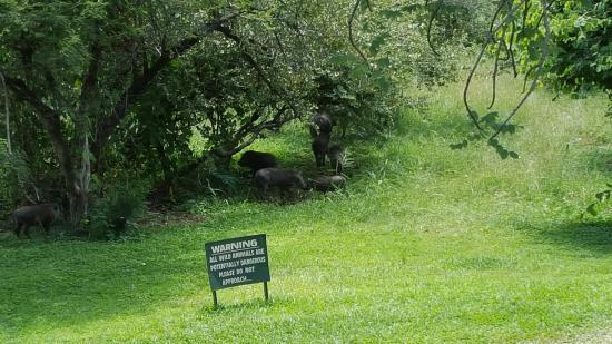 Ilala Lodge: Animals outside of the room
