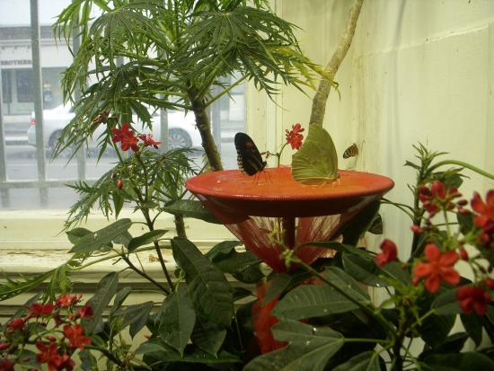 Audubon Insectarium Picture Of Audubon Butterfly Garden And Insectarium New Orleans Tripadvisor