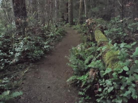 Courtenay, Canadá: NATURE WALKS