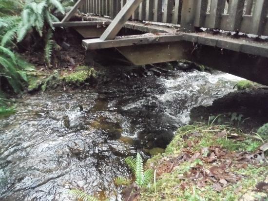 Courtenay, Canadá: STURDY BRIDGES
