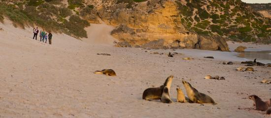 South Australia, Australien: Seal Bay Conservation Park