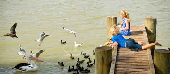 Murray Bridge, Australia: Feeding the pelians on the Murray River