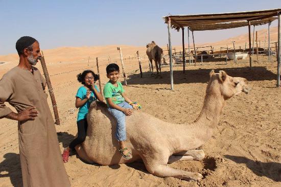 Liwa Oasis, Emiratos Árabes Unidos: Camel Rides !