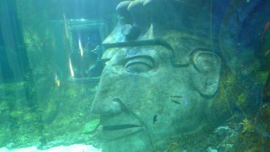Sealife Picture Of Sea Life Orlando Aquarium Orlando