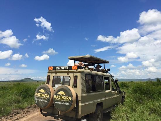 Mazingira Safari