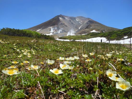 Asahidake Natural Hiking Route: 可憐に咲くお花達