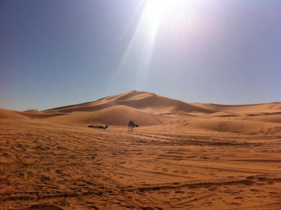 Desert Trips Morocco Day tours: sahara