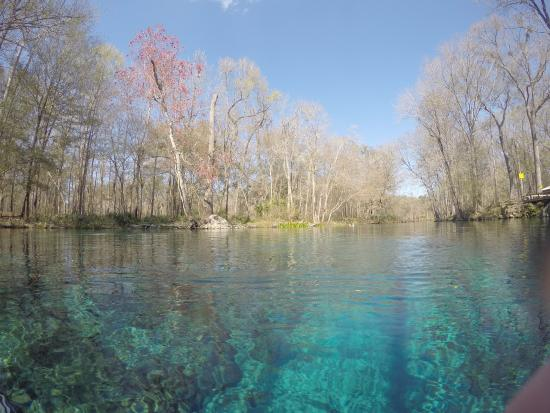 Ginnie Springs: Just above the spring