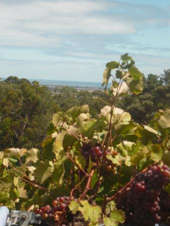 The Blue Grape Vineyard Accommodation: Aussicht zimmereigenen Terasse