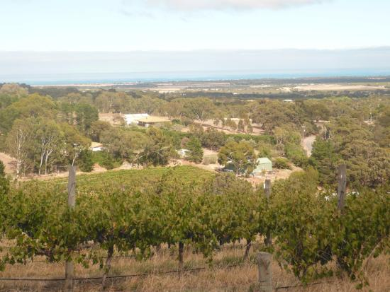 The Blue Grape Vineyard Accommodation: Ausblick über das Weingut bis zum Meer