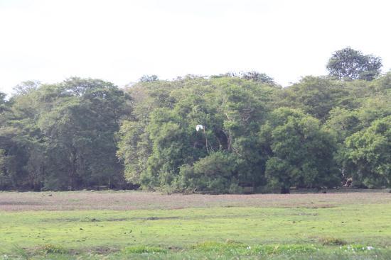Chilaw, Sri Lanka: the villu