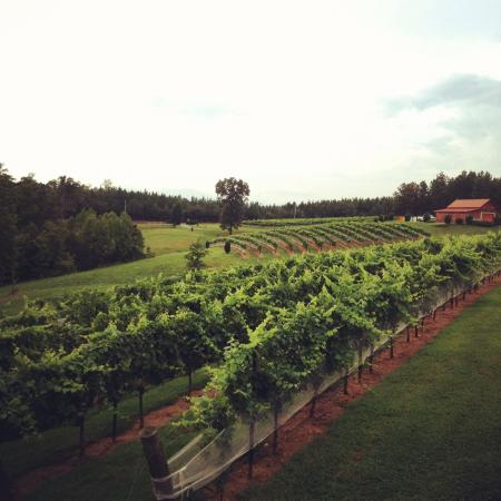 Overmountain Vineyards: Petit Verdot and Merlot