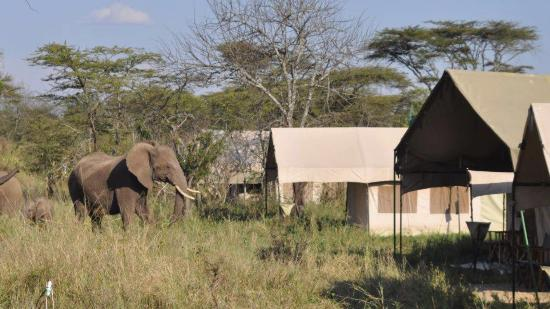Angani Serengeti Camp