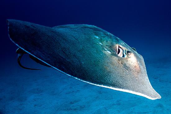Aqua-Marina Dive Centre
