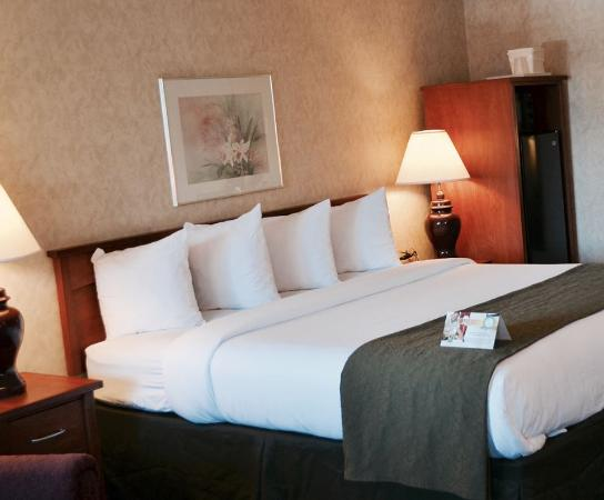 Quality Inn & Suites Silicon Valley: Queen Bed