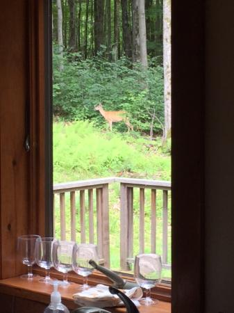 Bearsville, Нью-Йорк: deer from the kitchen window