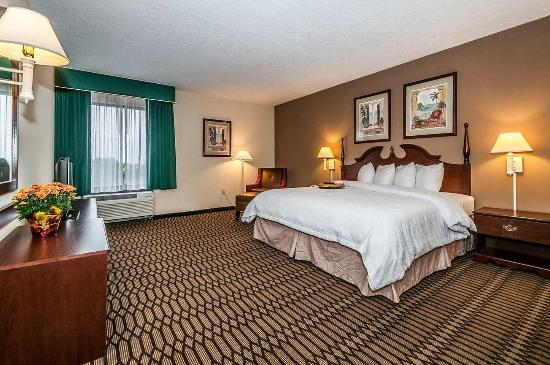Hampton Inn St. Petersburg: King Standard
