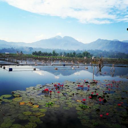 Lake seloton in lake sebu picture of lake sebu cotabato city lake seloton in lake sebu altavistaventures Image collections