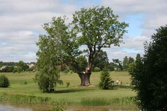 Puhajarv War Oak
