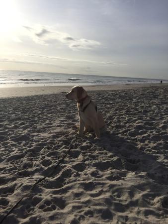 Canova Beach Dog Park: photo0.jpg