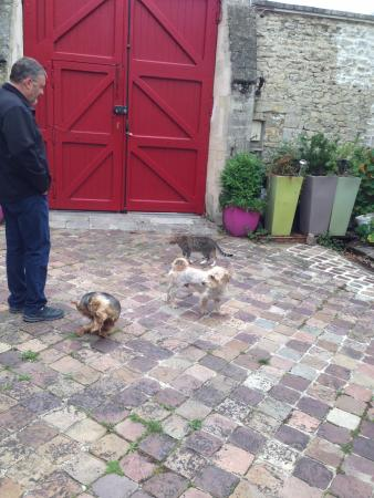 Villa Aggarthi B&B: A few of the furry family and guests are always happy to greet you on your arrival.