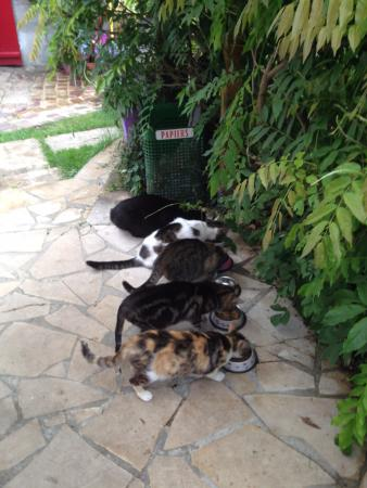 Villa Aggarthi B&B: Feeding time for some of the guest cats and some of the family cats too.