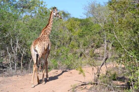 Waterbuck Game Lodge: Every day is a truenew experience