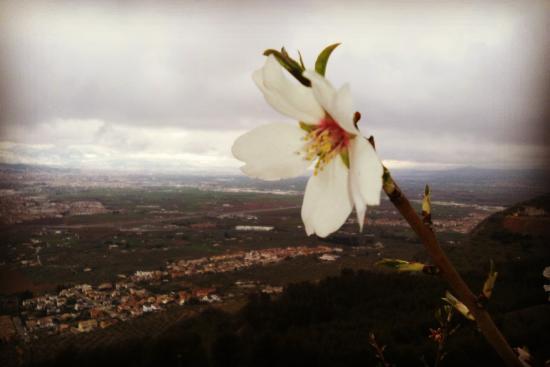 Caparacena, España: Ruta senderista al Torreón de Albolote muy cerca del hotel