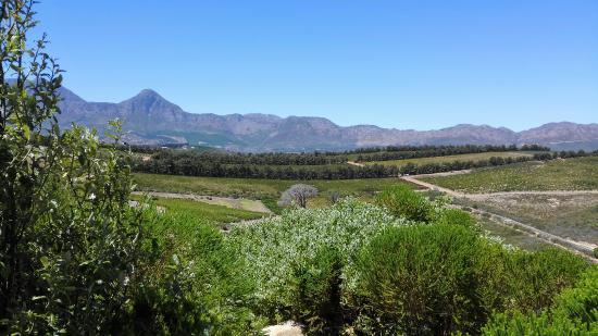 Waterkloof Wines : IMG_20160227_132641_large.jpg