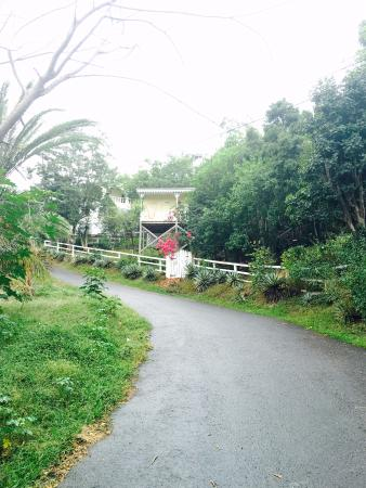 Galley Bay Cottages: Treehouse cottage up the road