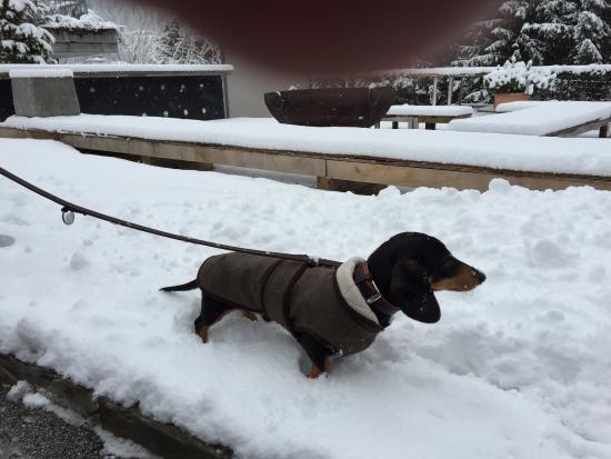 Hotel Miramonte: Ein toller Winterkurzurlaub mit Hund, der sehr willkommen war!