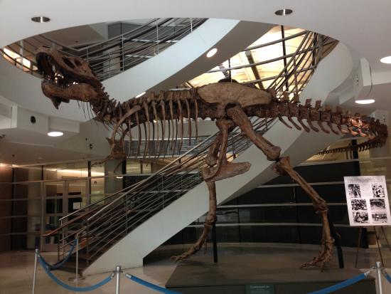 University of California Museum of Paleontology