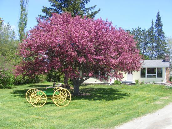 Kawartha Lakes, Canadá: Dromoland Orchard & Stables